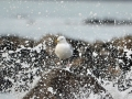Seagull Spray